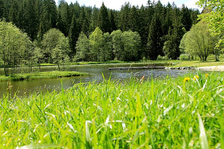 Badespaß am Naturbadesee in Mauth