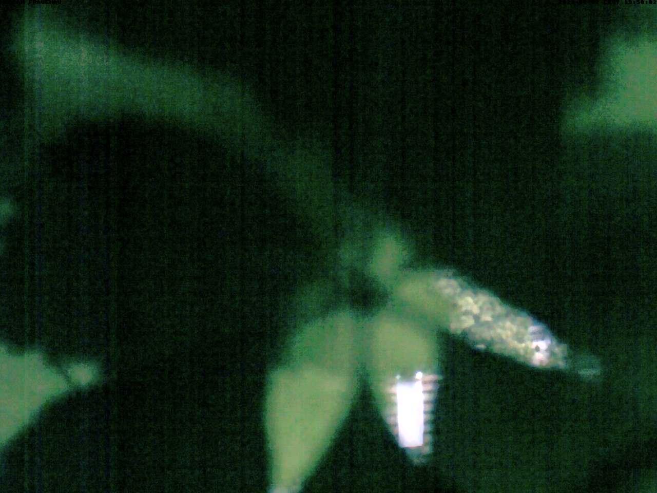 Webcam Frauenau